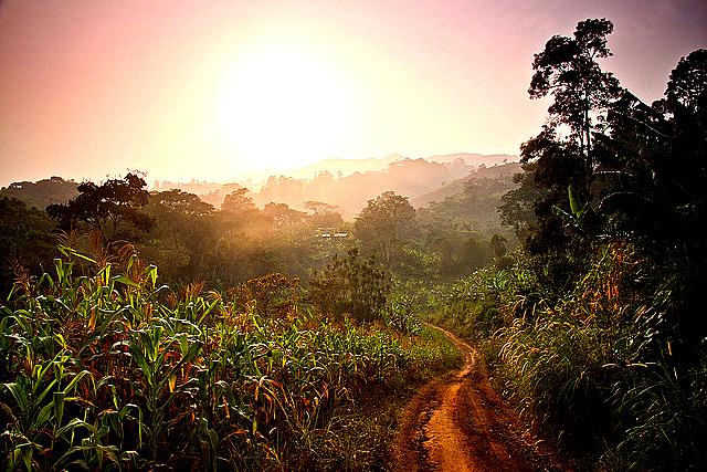 Un sentier s enfonssant dans la broussaille paysage de la region sud ouest du Cameroun