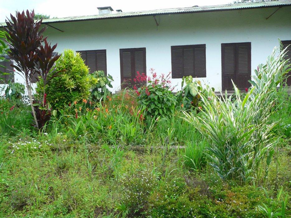 Region du Littoral Cameroun, vue d un des batiments d une des plus grandes proprietes coloniales francaises de la region, entouree de plantations de cafe